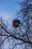 Färgade ballonger som klibbas i filialerna av ett träd, Prague, Tjeckien royaltyfria foton