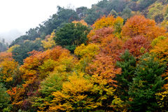 Färgade berg och skogar Arkivbilder