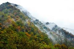 Färgade berg och skogar, moln och mist Royaltyfri Foto