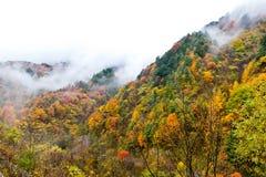 Färgade berg och skogar, moln och mist Arkivfoto