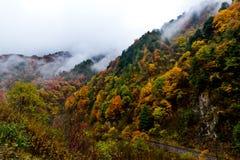 Färgade berg och skogar, moln och mist Royaltyfria Bilder