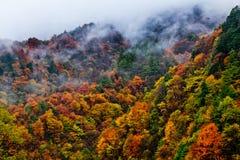 Färgade berg och skogar, moln och mist Royaltyfri Bild