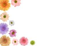 färgade blommor Royaltyfri Foto