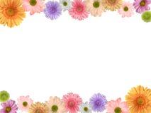 färgade blommor Arkivbilder