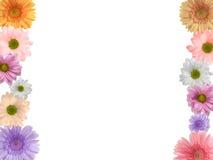 färgade blommor Royaltyfria Bilder
