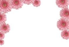 färgade blommor Royaltyfri Fotografi