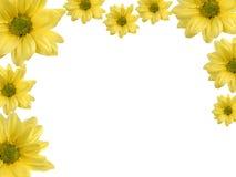 färgade blommor Royaltyfri Bild