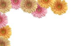 färgade blommor Arkivbild