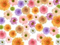 färgade blommor för bakgrund Arkivbild