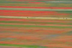 Färgade fält Royaltyfri Bild