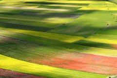 färgade fält Arkivfoto