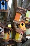 färgade hus för fågel Royaltyfri Fotografi