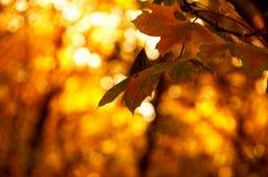 färgade leaves Royaltyfria Bilder