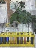 Färgade provrör i ett laboratorium arkivbild