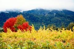 färgade vingårdar för höst Royaltyfri Bild