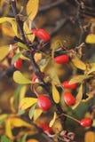 Färgar av höst Fotografering för Bildbyråer