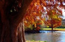 Färgar av höst Royaltyfria Bilder