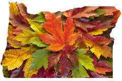 Färgar den blandade nedgången för Oregon lönnlöv bakgrund USA Royaltyfri Bild