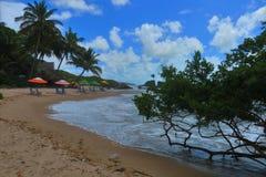 Färgat paraply på stranden av Tambaba i det Paraiba tillståndet, Brasilien Royaltyfri Bild
