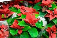 Färgbilden av många den olika sorten blommar ordnat på blomsterhandelhyllor Fotoet togs i mitt dagen med natur Arkivfoto