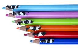 Färgblyertspennor och ko Fotografering för Bildbyråer