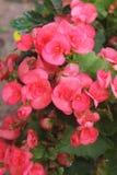 Färgen av dessa mycket lilla blom inviterar arkivfoto