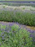 Färgen av fältet Arkivbild