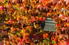Färgen av hösten på en solig vägg royaltyfri fotografi