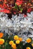 Färgen blommar i trädgården arkivfoto