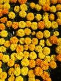 2 färger Royaltyfria Foton