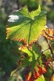Färger av automnen Arkivbilder