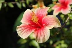 Färger av blommor Arkivbilder