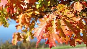 Färger av de ändrande säsongerna