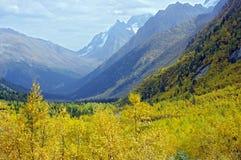 Färger av den guld- hösten i bergen Arkivfoton