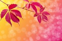 Färger av hösten Arkivbilder