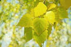 Färger av hösten Arkivfoto