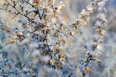 Färger av hösten Royaltyfria Bilder