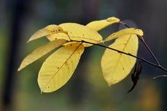 Färger av hösten Royaltyfri Foto