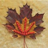 Färger av hösten Fotografering för Bildbyråer