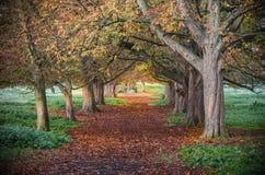 Färger av hösten i en skog Arkivfoton