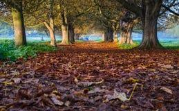 Färger av hösten i en skog Royaltyfria Bilder