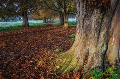 Färger av hösten i en skog Royaltyfri Bild