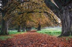 Färger av hösten i en skog Arkivbild