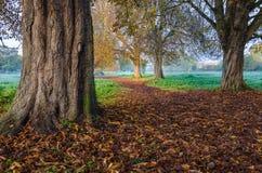 Färger av hösten i en skog Royaltyfri Foto
