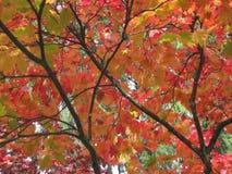 Färger av hösten/nedgången fotografering för bildbyråer