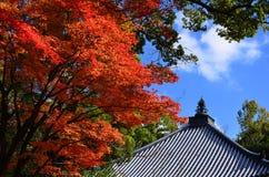 Färger av höstsidor, Kyoto Japan arkivbild