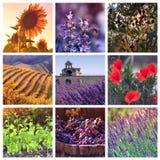 Färger av Provence, Frankrike Royaltyfri Bild