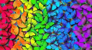Färger av regnbågen Modell av den mångfärgade fjärilsmorphoen, texturbakgrund royaltyfria bilder