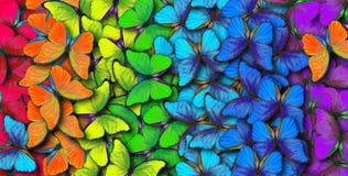 Färger av regnbågen Modell av den mångfärgade fjärilsmorphoen, texturbakgrund arkivfoton
