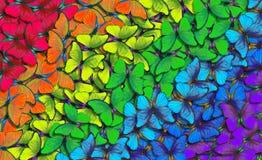 Färger av regnbågen Modell av den mångfärgade fjärilsmorphoen, texturbakgrund mångfärgad naturlig abstrakt modell arkivbilder